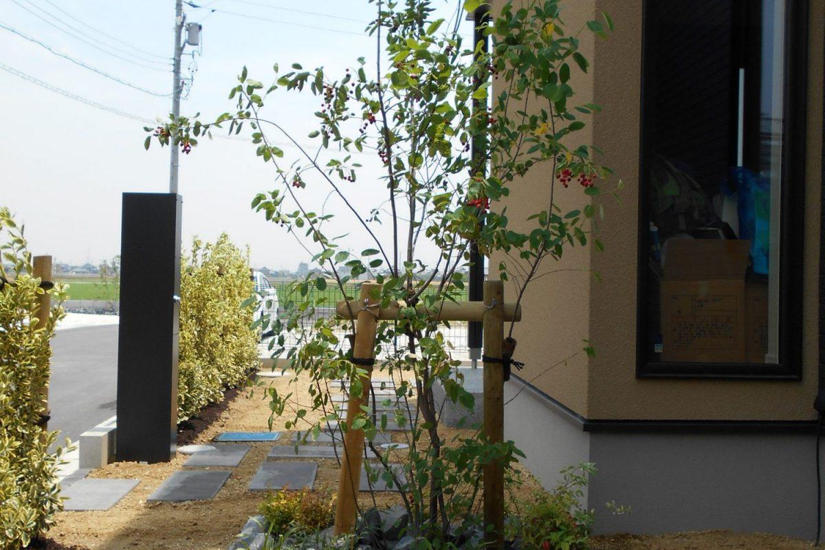 海部郡 O様邸 生垣とシンボルツリーのあるお家